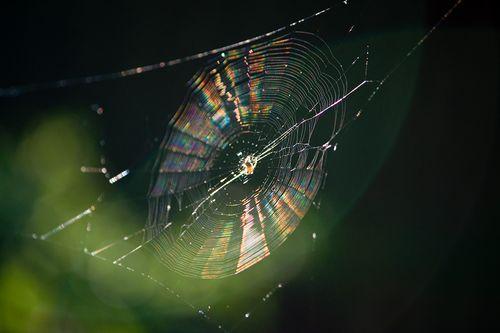 Web-IMG_4453