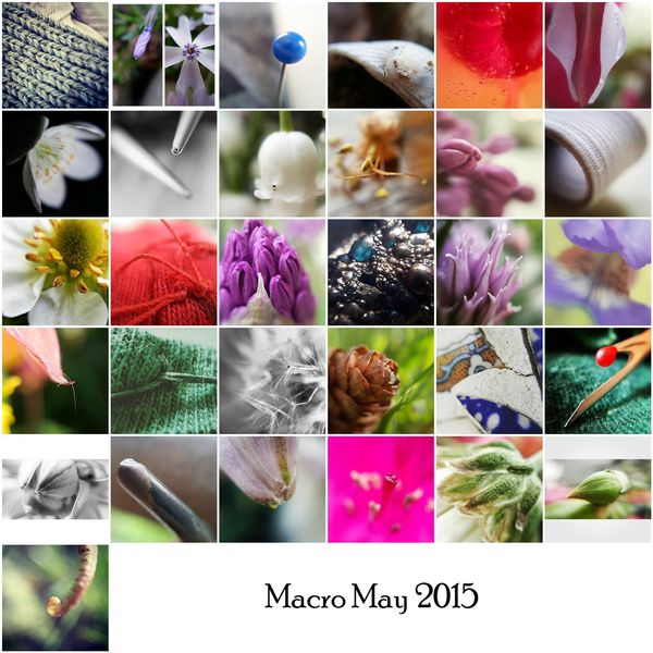 Macromaymosaic2015