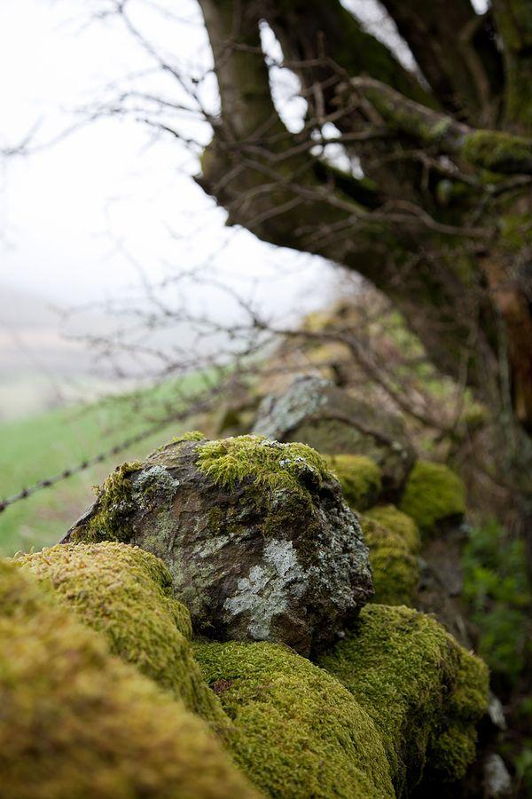 Mossy stone walls