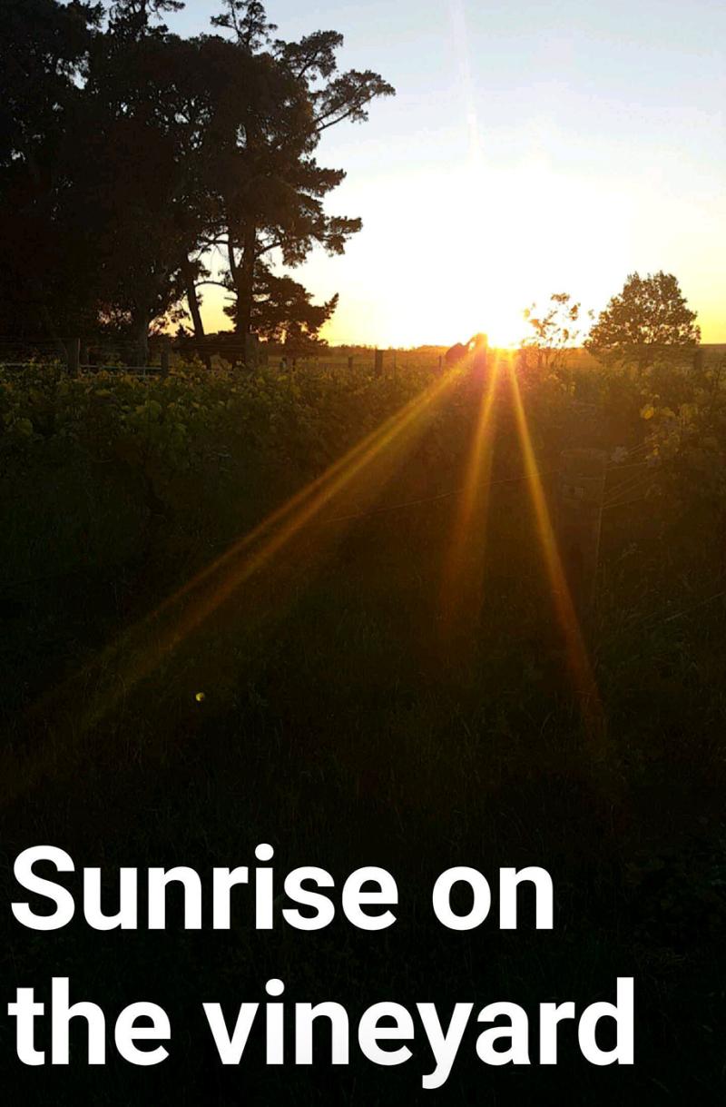 Sunrise-NZ-20161123