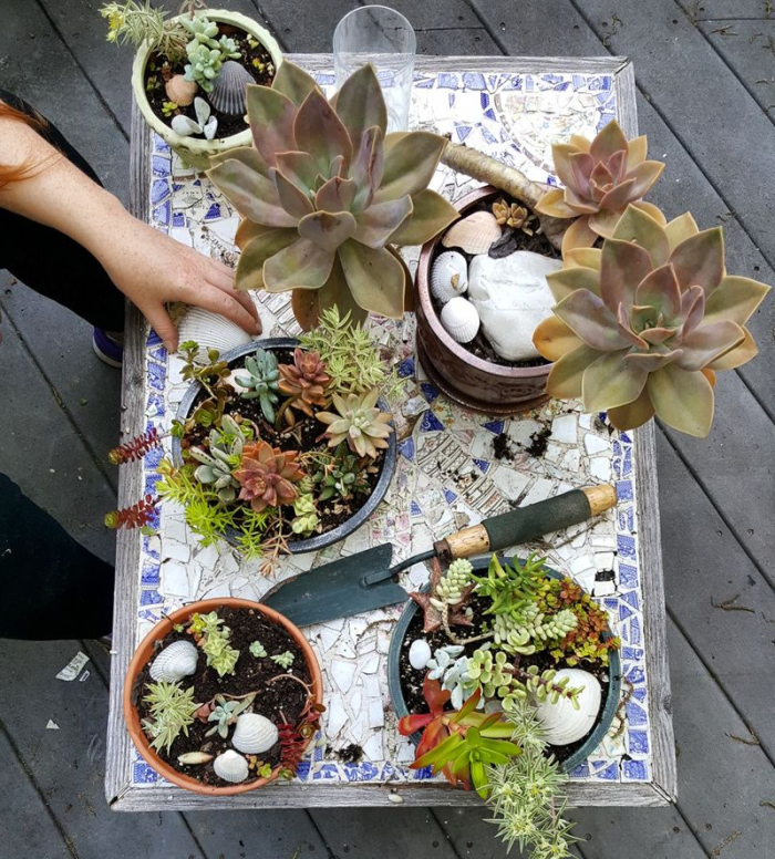 June - succulents