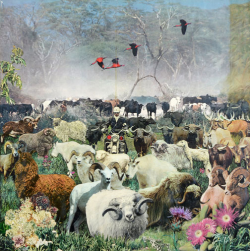 SuziGablikTropism1970