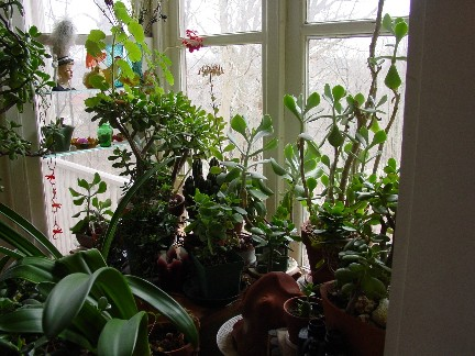 garden_room.jpg